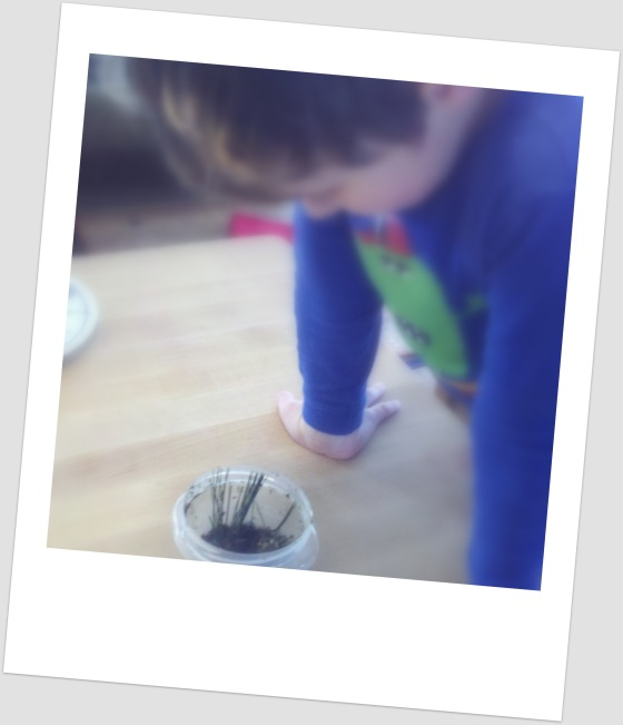 We planted conifer needles to see if they'll grow.
