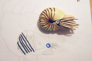 Molly's 4D and Joseph's 2D chambered nautilus